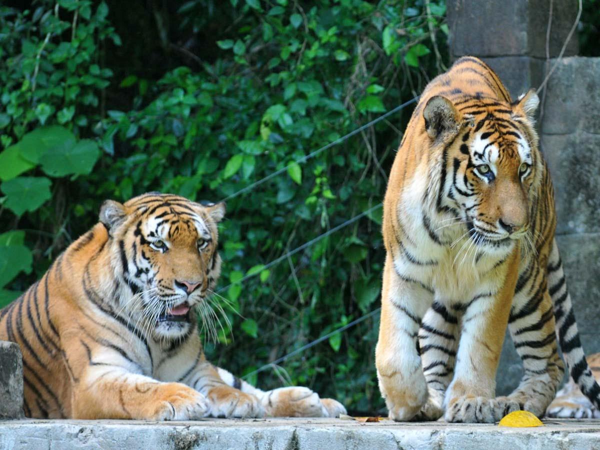 Lost World Tiger Valley
